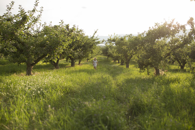 orchardshot1